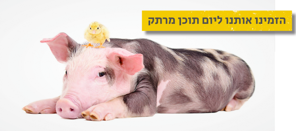 pig-new_1200