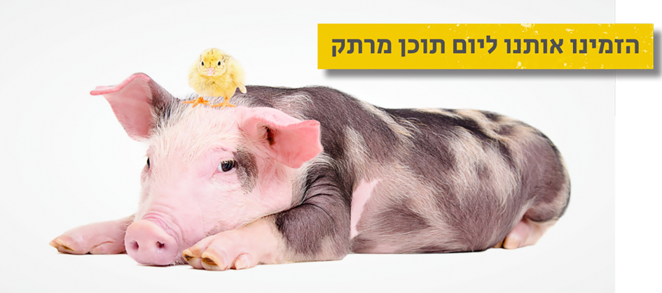 pig-new_12001